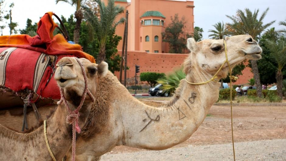 Marrakesh ePrix: Opening up new continent