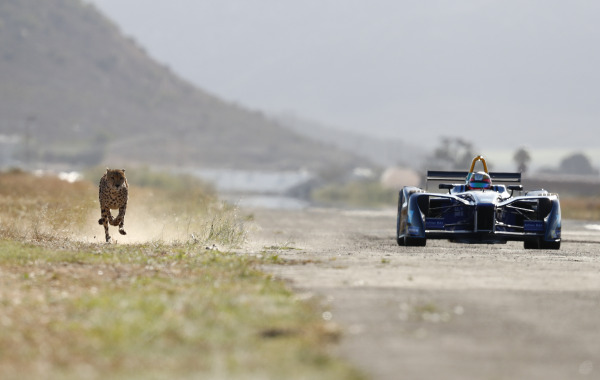 Formula E car races a cheetah